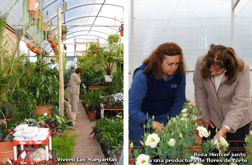 Actualidad salta mesa de ideas de floricultura for Gramineas ornamentales vivero
