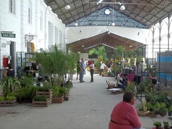 Jujuy tiene la flor m s bella for Modelo de proyecto de plantas ornamentales