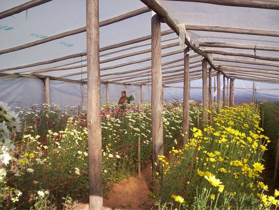 Econom a y viveros im genes de floricultura for Plan de negocios de un vivero de plantas