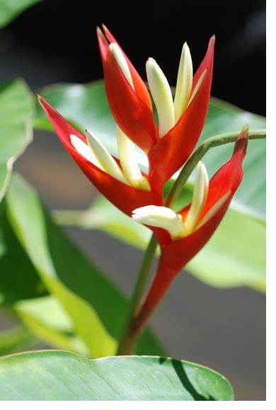 Economia viveros for Vivero plantas tropicales