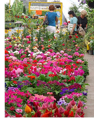 Economia y viveros for Plantas que hay en un vivero