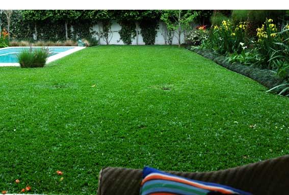 Clases de cesped fabulous eliminacin de malas hierbas for Como cuidar el pasto