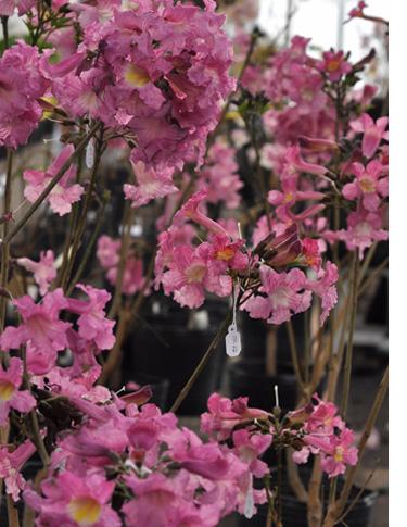 Vivero rosa del norte interesting beta rain jacket green for Viveros en talca