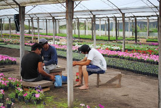 Econom a y viveros im genes de floricultura for Viveros en moreno