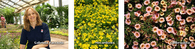 Mejoramiento gen tico de ornamentales for Gramineas ornamentales vivero