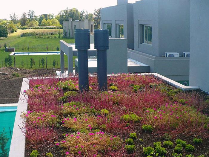 Techos y paredes verdes for Gramineas ornamentales vivero