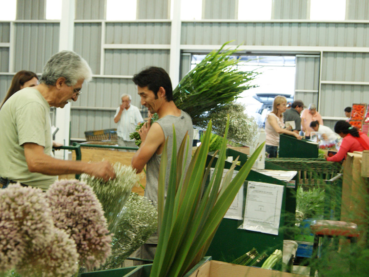Mercoflor un mercado de plantas y flores for Viveros en la plata
