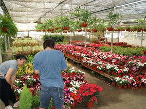 Mercoflor un mercado de plantas y flores for Gramineas ornamentales vivero