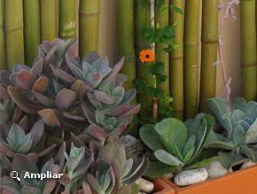 Con sabor a hogar for Gramineas ornamentales vivero