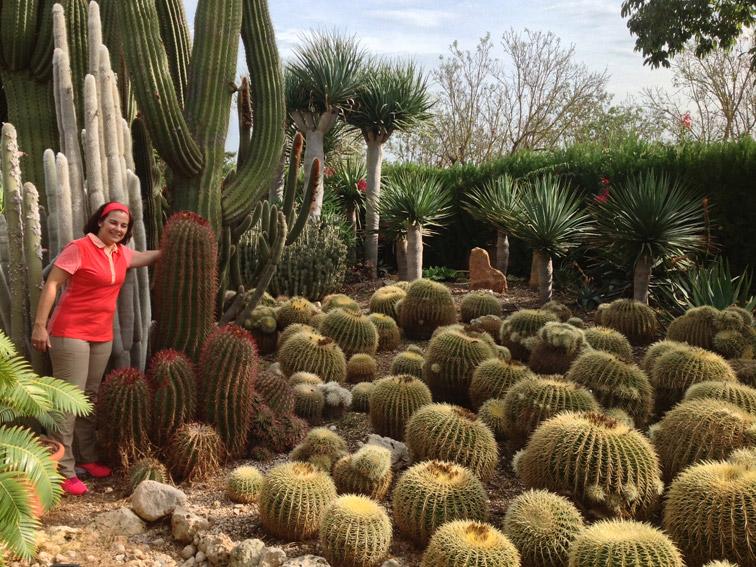 Suculentas for Cactus variedades