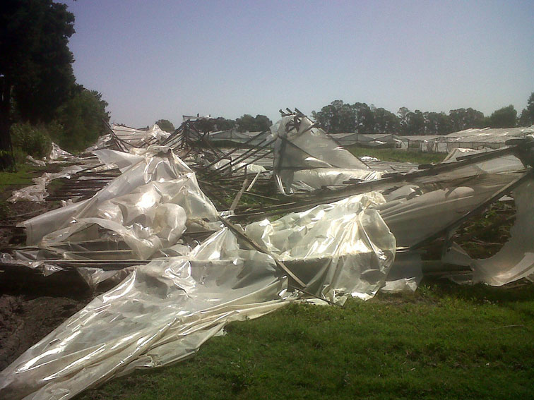 La plata un fuerte temporal arrasa varios cultivos for Viveros en la plata
