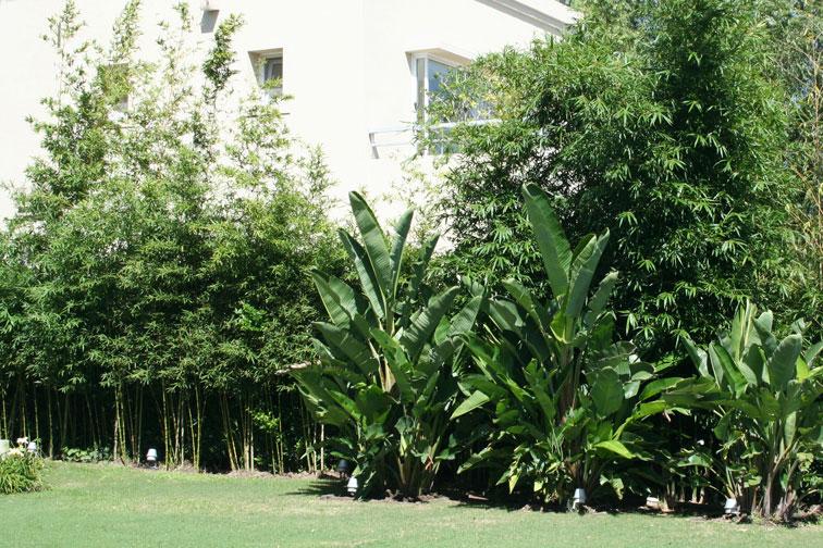 C mo armar un cerco vivo - Jardin de bambu talavera ...