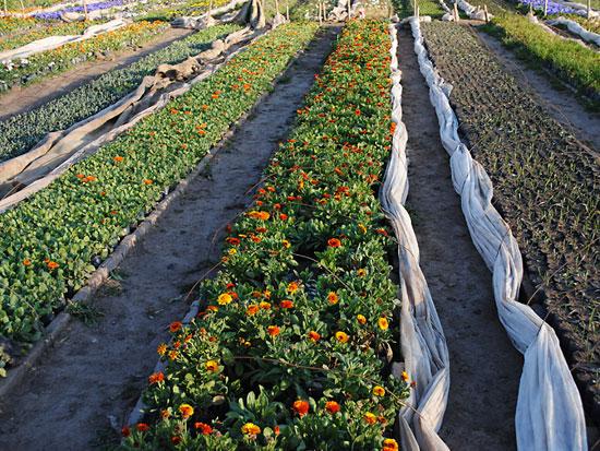Econom a y viveros im genes de floricultura for Viveros en cordoba