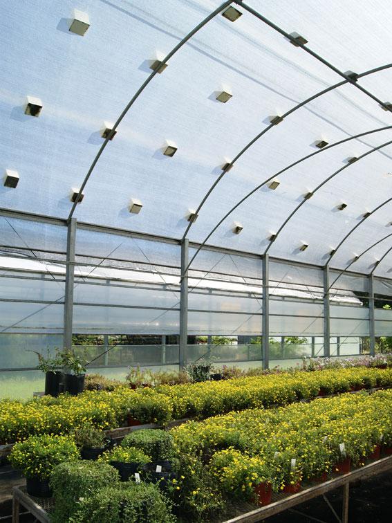 Invernadero manejo de la temperatura Plantas de invernadero