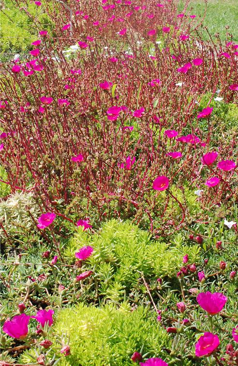 Sustratos para terrazas verdes y jardines verticales for Plantas utilizadas en jardines verticales