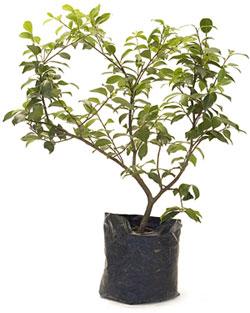 Floricultura proyectos jardiner a bons i econom a for Como realizar un vivero