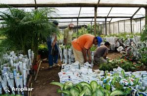Floricultura argentina for Produccion de plantas ornamentales