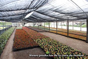 fuerte apoyo del estado al mercado flor cola de moreno