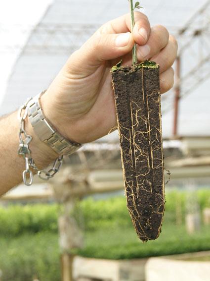 Sustratos espec ficos para plantas c tricas for Preparacion de sustrato para viveros forestales