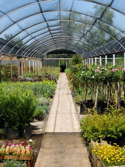 La empresa del mes e v valls gardens for Viveros en cordoba