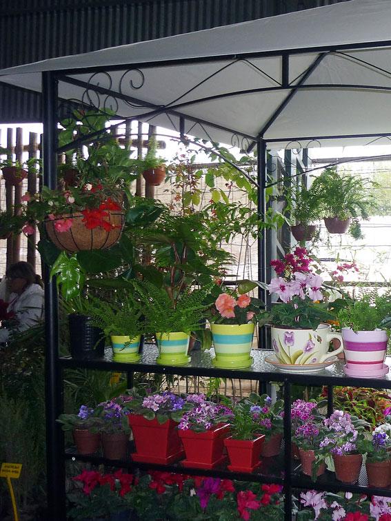 Jujuy sigue siendo la m s bella for Modelo de proyecto de plantas ornamentales