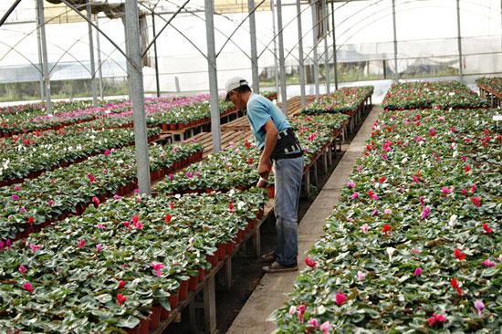 Econom a y viveros im genes de floricultura for Plantas que hay en un vivero