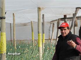 Controlan ara uelas con vaquitas de san antonio for Gramineas ornamentales vivero