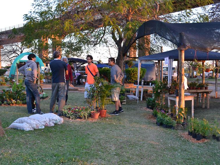Corrientes florece a pesar de las tormentas for Gramineas ornamentales vivero