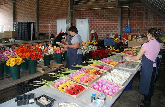 Econom a y viveros im genes de floricultura for Viveros en la plata