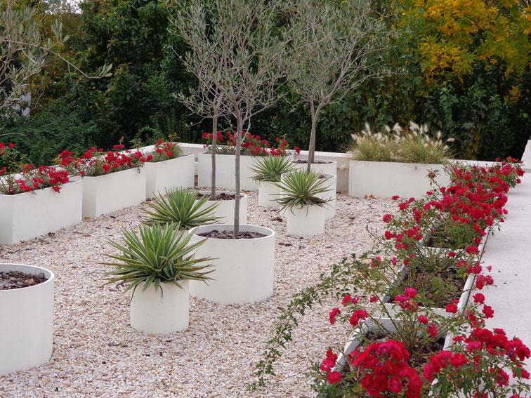 Plantas para macetas a pleno sol casa dise o for Plantas para pleno sol